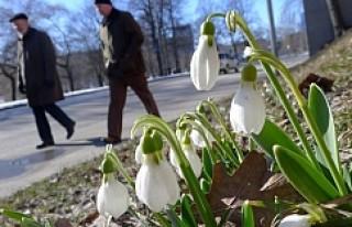 İsveç'te 2 hafta bahar havası
