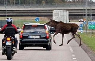 İsveç'te geyik kazalarını önleyecek buluşa...