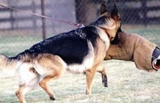 İsveç'te polis köpeği bir adamı ısırarak...