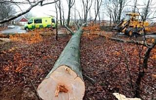 İsveç'te üzerine ağaç düşen kişi öldü