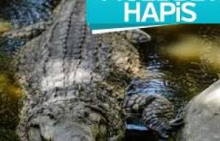 Kenya'da beş kişiyi yiyen timsaha müebbet...