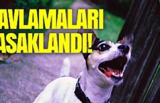 Köpeklerin havlaması yasaklandı