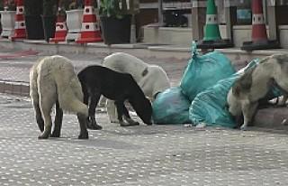 """Kulu'da Sokak Köpekleri İçin """"Yaşa-Yaşat""""..."""