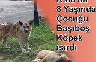 Kulu'da 8 Yaşındaki Çocuğu Başıboş Köpek...