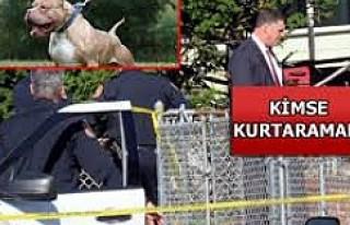 Pitbull dokuz yaşındaki kızı öldürdü!