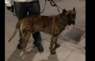 Stockholm'de Köpeğine Nazi Sembolü Çizen...