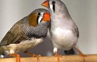 Türkiye'de En Sevilen Ev Hayvanı: Kuş, İsveç'te...