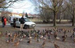 Stockholm'de yabani hayvanlar ve kuşlar için...