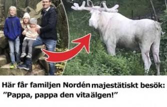 İsveçli aile davetsiz misafir karşısında şaşkına döndü
