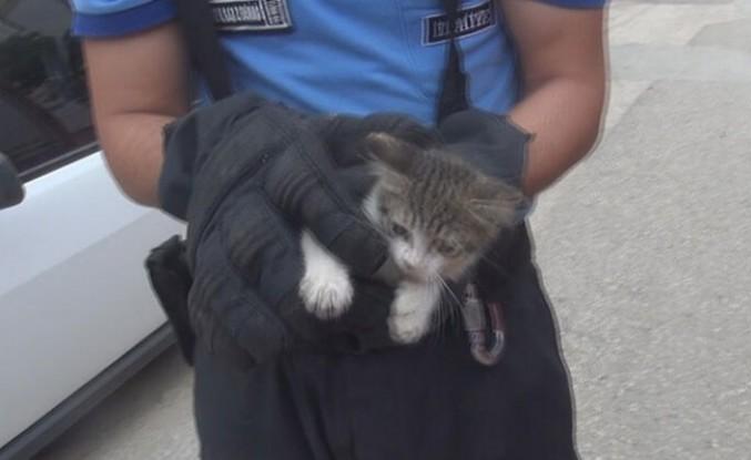 Gurbetçinin dikkati kedinin hayatını kurtardı