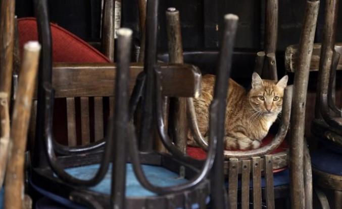 Belçika'da bir kedi, sahibinden koronavirüs kaptı; Covid-19 insandan hayvana da bulaşıyor