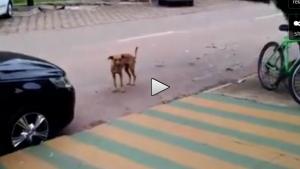 Köpek müziği duyunca kendinden geçti
