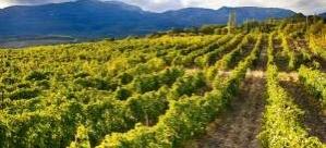 İsveç Kralı'nın kuzeni işgal edilen Kırım'da şarap üretecek