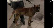 Stockholm'de Köpeğine Nazi Sembolü Çizen Adam Gözaltına Alındı